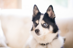 Desert Aloha Photography - Pets - 1
