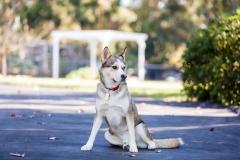 Desert Aloha Photography - Pets - 3