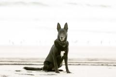Desert Aloha Photography - Pets - 5