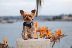 Desert Aloha Photography - Pets - 6